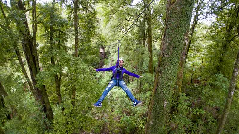Canopy Tours Rotorua - Epic deals and last minute discounts