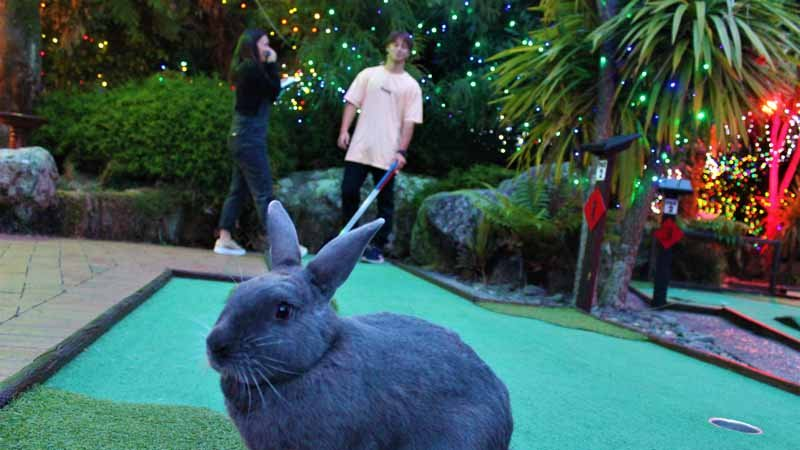 Enjoy the challenge of 18-hole championship Mini Golf at Mini Golf New Zealand's Rotorua course!