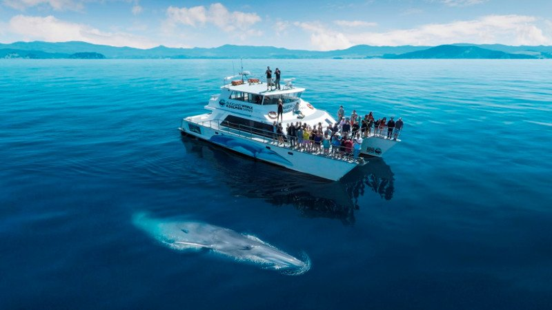 "Auckland Whale & Dolphin Safari - A New Zealand 'must do""'activity right here in Auckland!"
