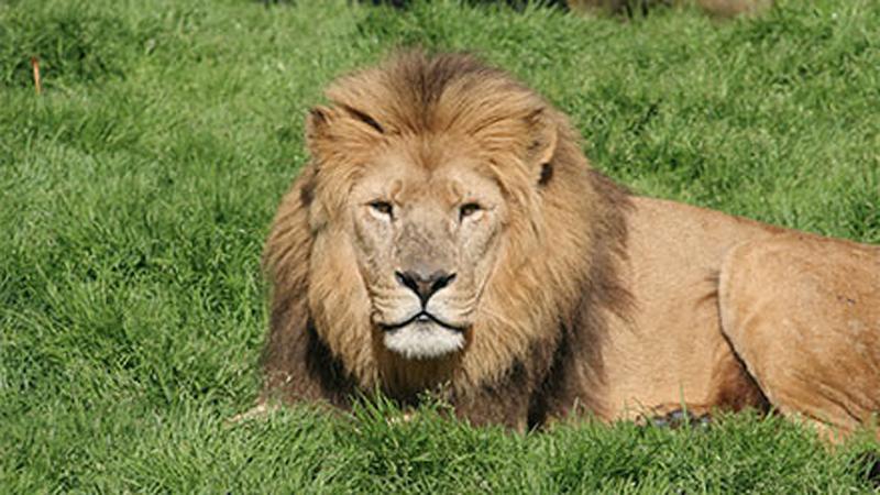 Last minute spa deals lion quays