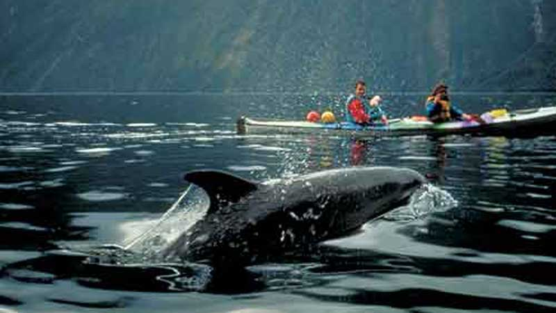 Join us in 5-star comfort as you come with us to discover Milford Sound by luxury coach and cruise!