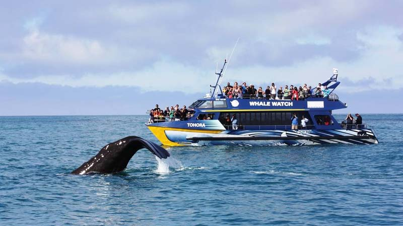 Boat Tours & Day Cruises