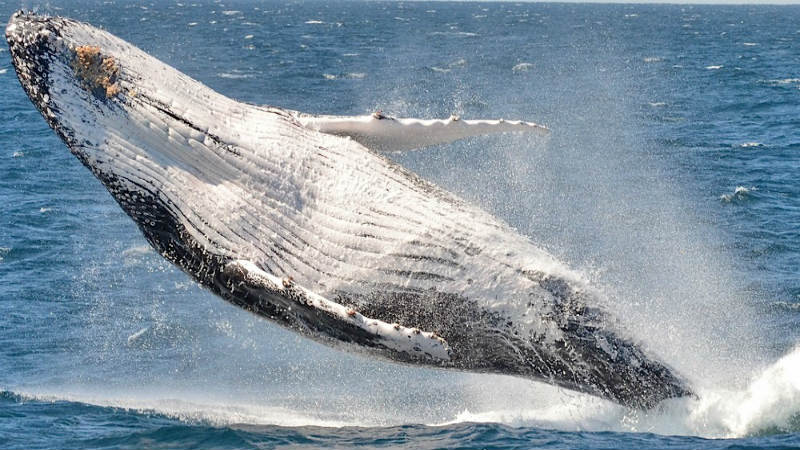 Board the Spirit of Gold Coast and sail to the Humpback Highway!