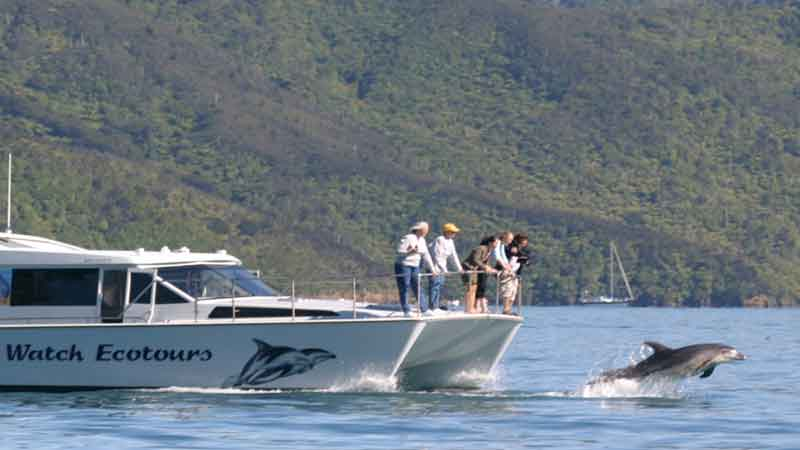 Swim with the dolphins and be at one with nature in the calm waters of New Zealand's beautiful Marlborough Sounds!