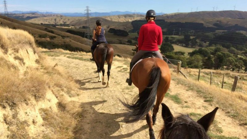 Trek through luscious forest, beautiful rivers and up rolling hills to see the valley lying before you. There's no better way to experience the never ending views of Ohariu Valley than by horseback.
