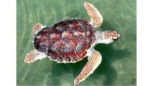 Turtle Discovery - 2 hour Sailing Outrigger Tour