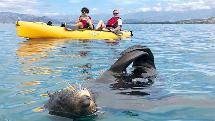 Seal Kayak Kaikoura - Seal Viewing Pedal Kayak Tour