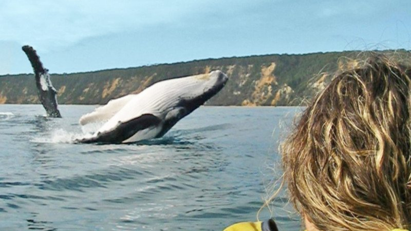 Join Epic Ocean Adventures for an unforgettable experience of Noosa's spectacular wildlife and natural beauty!