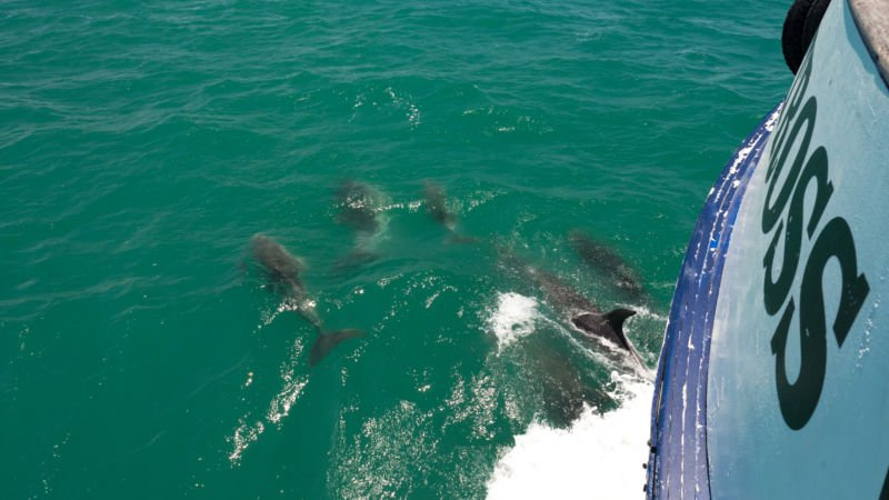 Join us for a relaxing 2.5 hour cruise around one of New Zealand's most spectacular marine destinations!