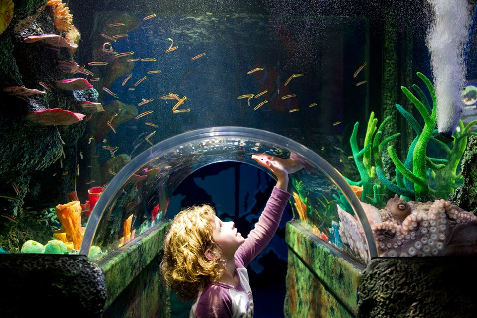 Take 20% off entry tickets to top Sydney attractions at Wilson Parking