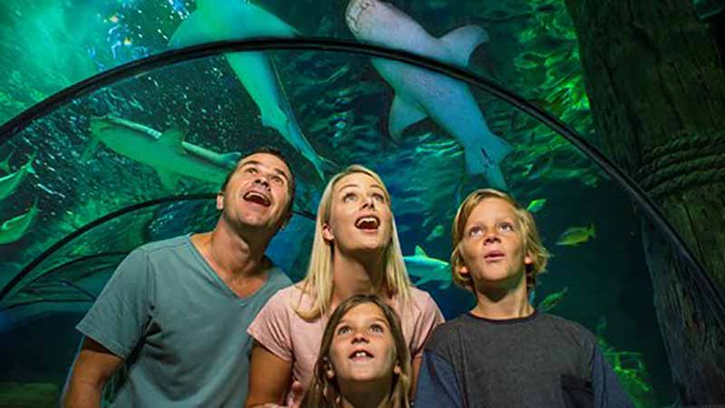 SEA LIFE Sunshine Coast is your ultimate destination for an unforgettable underwater adventure!