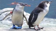 International Antarctic Centre - General Admission + VIP Penguin Backstage Pass