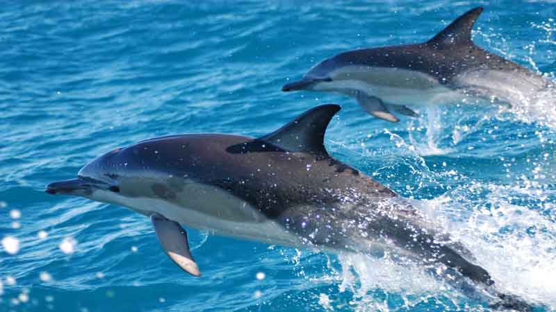 Join the award-winning team at E-ko Tours on their signature Marlborough Sounds Dolphin & wildlife cruise!